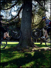 Wheeled Arborists